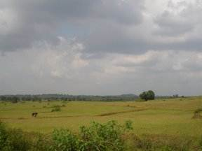 Subhadra Serene